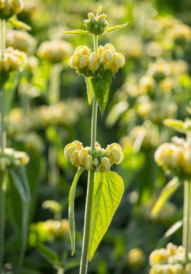 Garden Bush: 815 Best Fragrant Balcony Plants Images On Pinterest