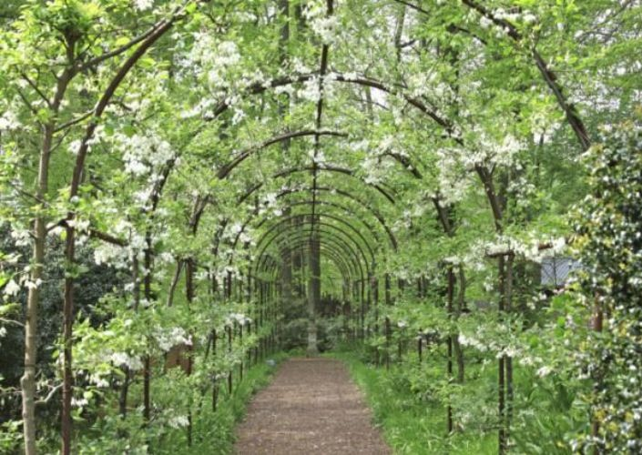 Moon Garden, Industrial Metal, Metal Work, Trellis, Garden Design, Flora,  Garden Ideas, Training, Backyard