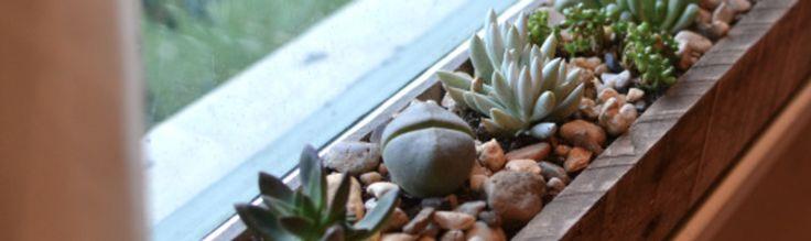 Суккуленты идеальные растения, которые объединяют в одну группу за способность подолгу обходиться без воды, сохраняя влагу в своих стеблях и листьях. Уход за суккулентами прост, а декоративные свойства сотни не похожих друг на друга растений, превращают садоводов в настоящих ценителей и коллекционеров. В этой статье мы расскажем, как своими руками создать микро-сад из растений суккулентов и оригинально украсить окна вашего дома.