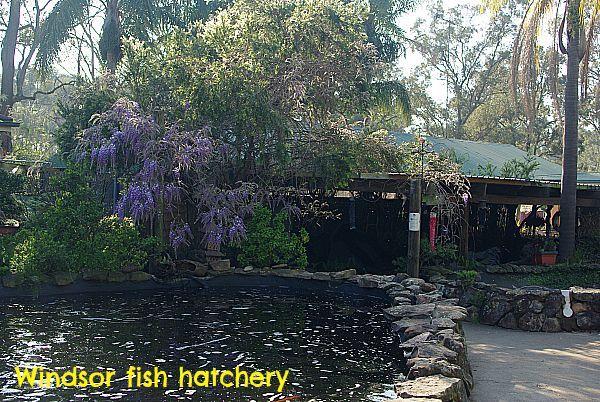 Windsor fish hatchery has a great range of preformed pvc ponds