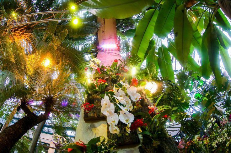 «Аптекарский огород» приглашает на кормление игуаны и охоту за орхидеями с запахами сыра и шоколада Москва 2016 Аптекарский огород