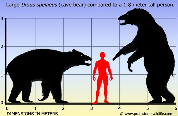 Ursus spelaeus (Cave Bear), Pleistocene. Ursus spelaeus did not compete with other European megafauna such as the woolly rhino and the woolly mammoth since they inhabited more open areas. Cave bears could also range across most of Europe. Mitochondrial genome revealed in 2008.