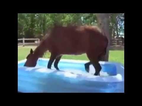 #Лошадь с удовольствием  плещется б бассейне! #Horse with pleasure splas...
