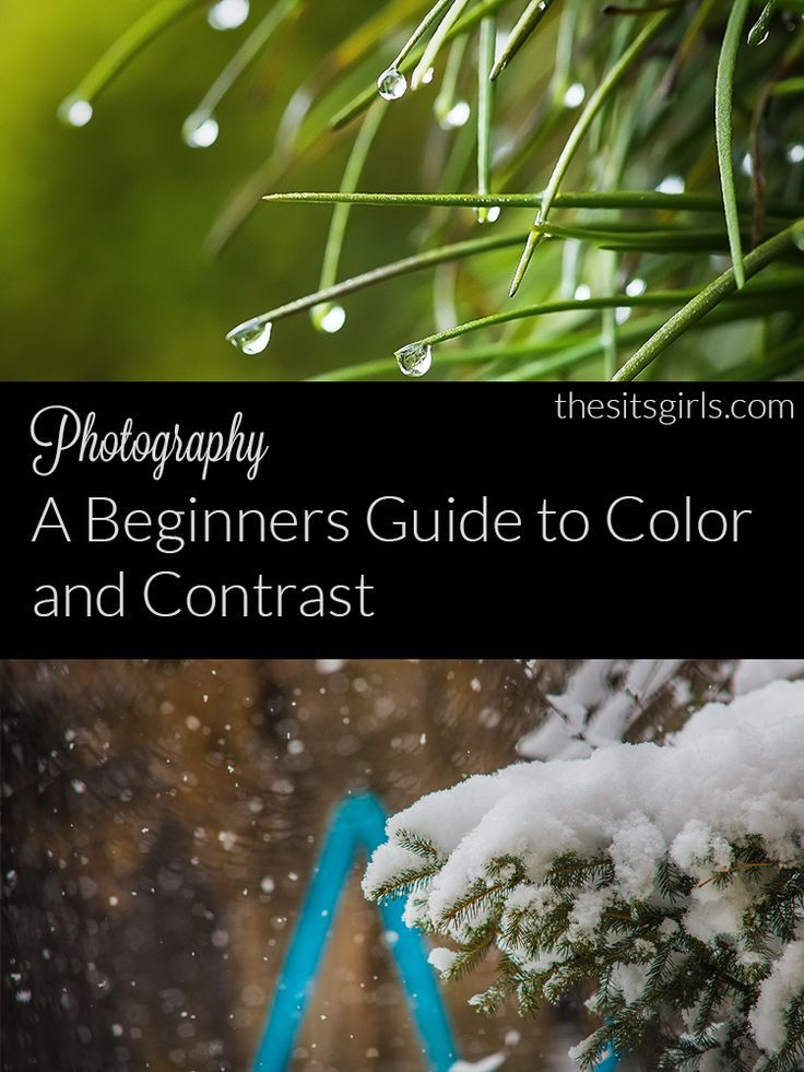 Photography Tips | This guide to color and contrast is a beginning photographer's best friend.