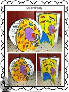 Animal and Plant Cell craftivity - students have to color the cells according to the legend, label the organelles, draw their own organelles, explain the function of the different organelles, and more. $