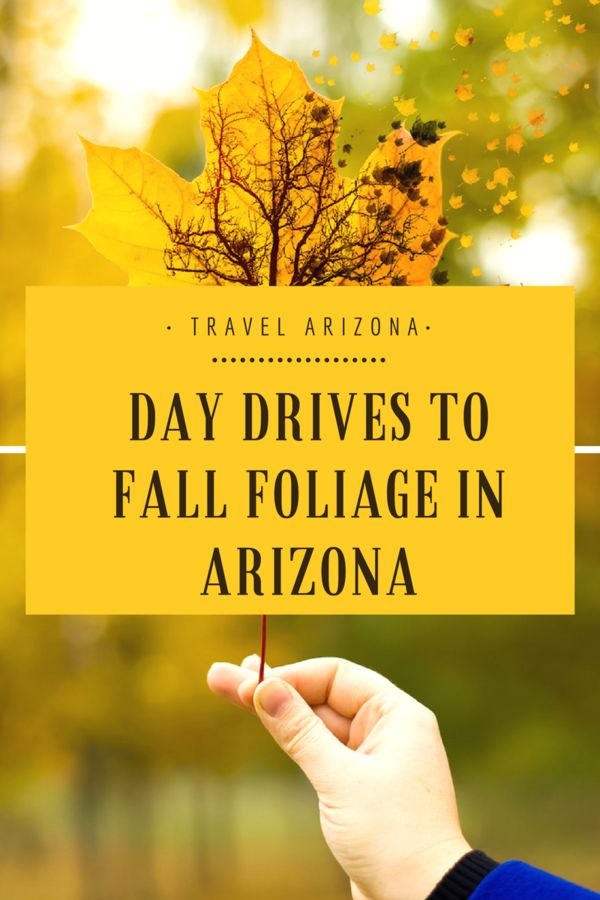 Day Drives to Fall Foliage in #Arizona