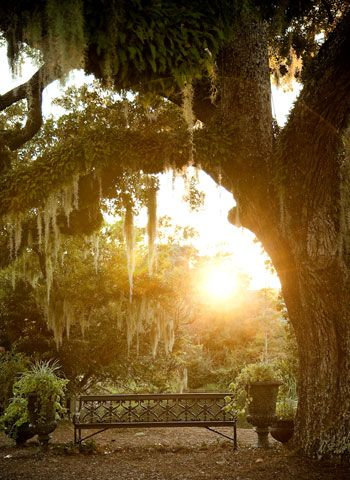 Spanish moss on Live Oak.Southern Style, Spanishmoss, Parks Benches, Beautiful, Gardens, Trees, Deep South, Places, Spanish Moss