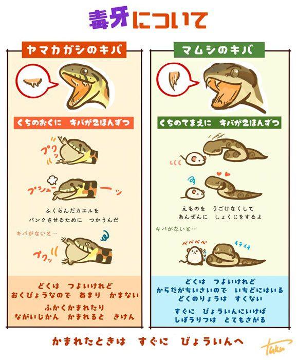 ヤマカガシの毒牙はカエルをパンクさせる は 正しくは パンクさせることもある だと作者より連絡がありました ヤマカガシ 動物 図鑑 フトアゴ