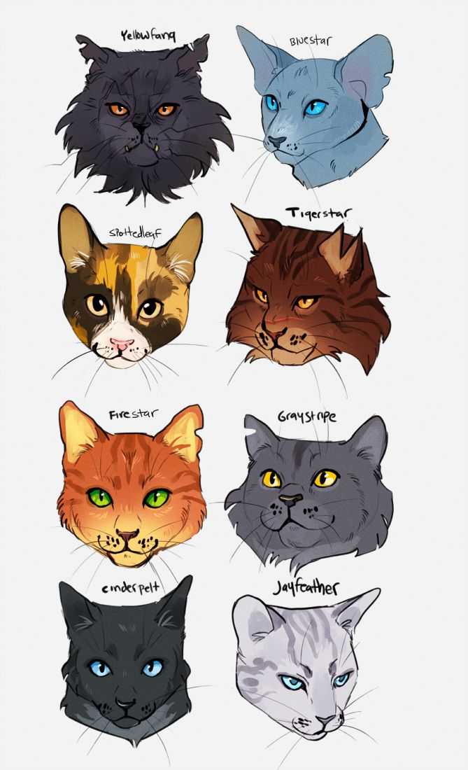 the main characters of cat in Maine coon cats are one of the most popular cat breeds in the us biggest domestic cat maine coons are the largest domestic cat breed (2000 characters only) characters remaining: comment deleted.
