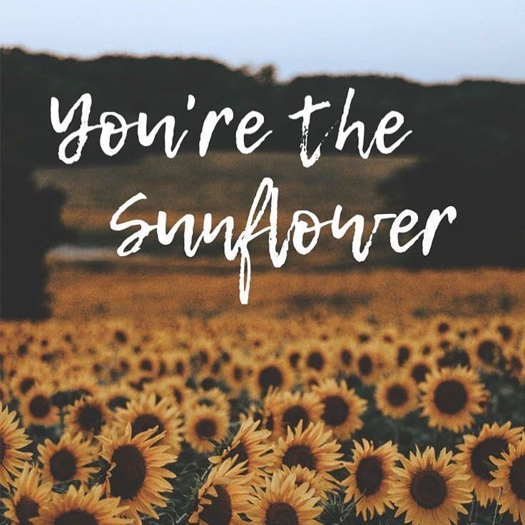 You Re The Sunflower You Can Find This Iphonewallpaper And Over 1000 Other Cute Backgrounds O Post Malone Quotes Post Malone Wallpaper Sunflower Quotes