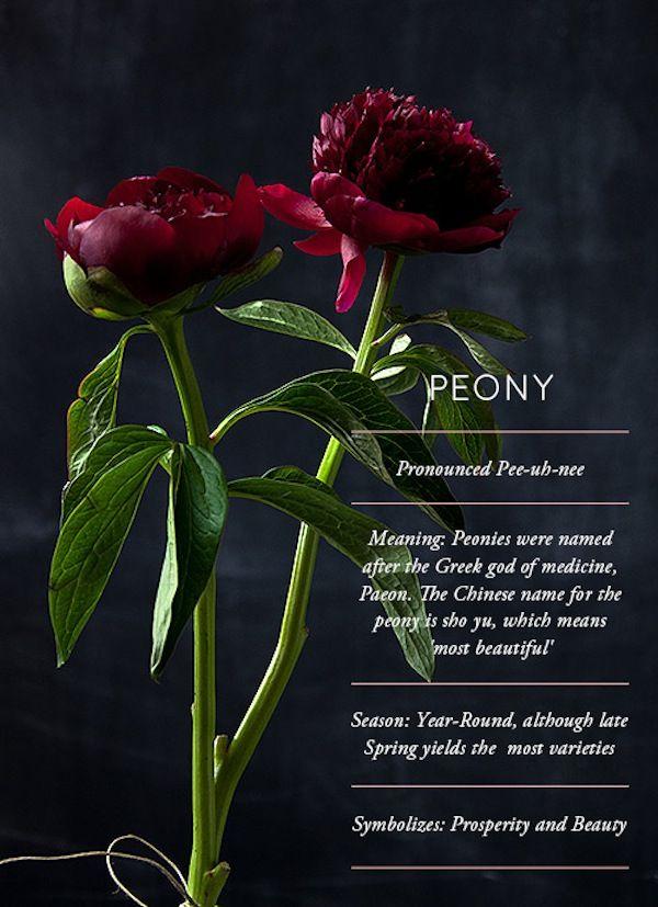 designsponge-peony-flower-glossary