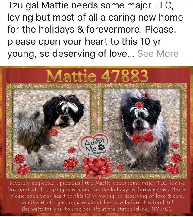 Mattie Needs Help Nyc Dogs Dog Safe Dogs