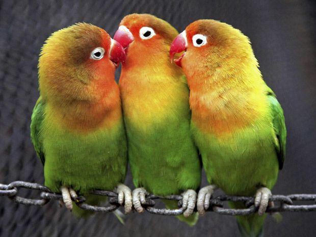 Parrots ~ I Love the Citrus Colours!