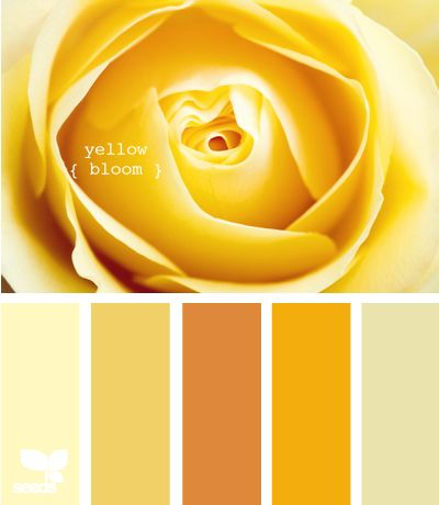 yellow bloom -- Potential palette.  I like the yellow walls, and yellow in general...but do I love it enough to do the entire room that way?