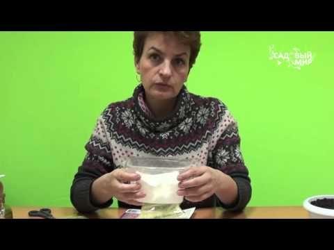 """Как вырастить анемоны и ранункулюсы. Сайт """"Садовый мир"""" - YouTube"""