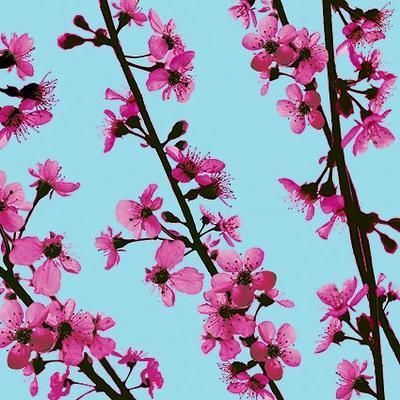 Cherrytree Branches poster print by Unknown