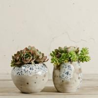 Digby and Scoop Planter