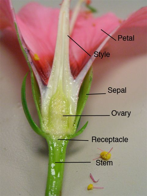 Parts Of A Flower Exploring Science Parts Of A Flowerflowers