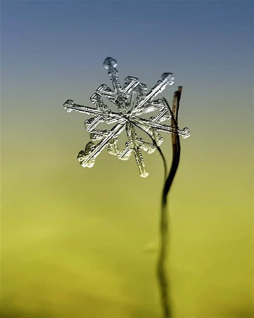 Russian photographer Andrew Osokin is a master of winter macro photography. His photo collection is chock full of gorgeous super-close-up photographs of in