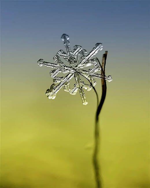 Andrew Osokin's macro photographs of snowflakes
