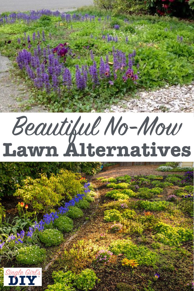 Never Mow Again With These Lawn Alternatives Lawn Alternatives No Grass Backyard Grass Alternative