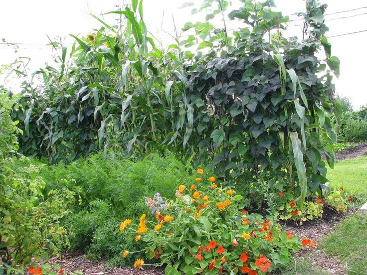 Wen Rolland - jardin et design écologique. Permaculture au Québec.