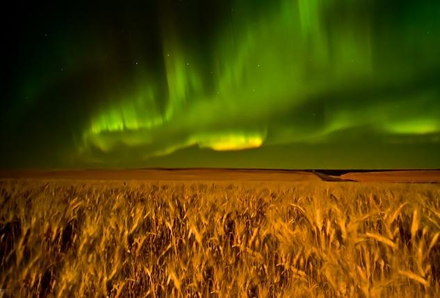 Northern Lights over a Saskatchewan wheat field.