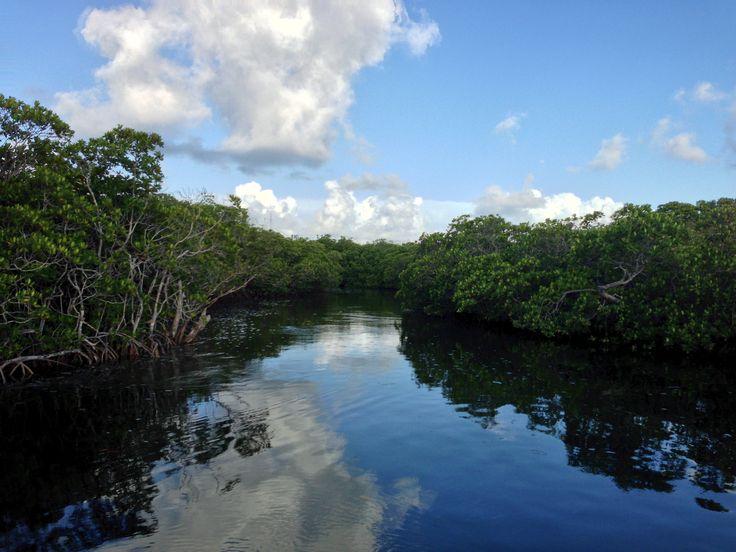 Mangrove preserve