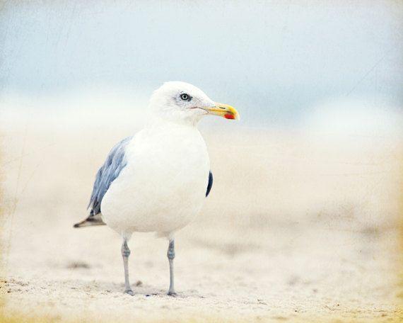 Beach Photography Print, Seagull Bird Wall Art, Light Blue Coastal Photo