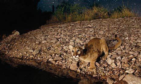 2006İlk digital kamera hilesi. National Geographic fotoğrafçılarından George Steinmetz, Güney Amerika dağ aslanını görüntülerken küçük bir ekleme yaptı.