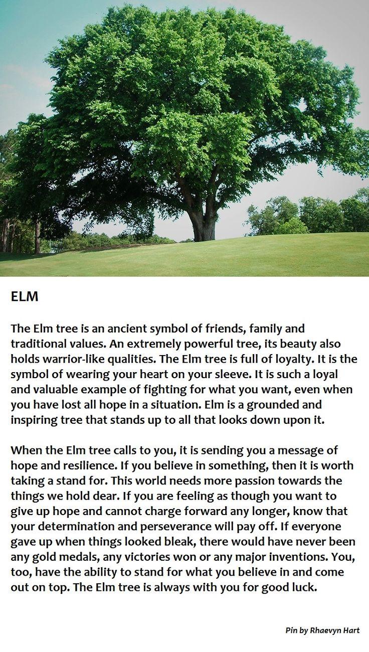 Elm Tree Chelsea
