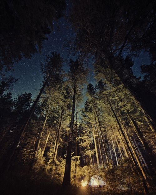 the woods: Nature, Starry Night, Camping, Beautiful, Outdoor, Trees, Forest, Place, Photo