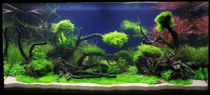 Adrie Baumann und das Aquascaping - Wasserpflanzen - Wasserpflanzendünger