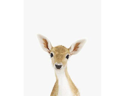 Baby Deer Little Darling