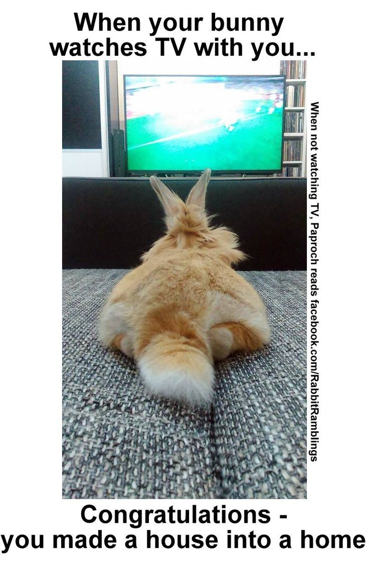 Funny rabbit funny rabbit pictures pictures of rabbits funny - Here Are Some Memes That Have Been Found Around The Internet And Perhaps Been Featured In A Rabbit Ramb