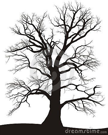 Silhouette of a black tree on white, oak Summer