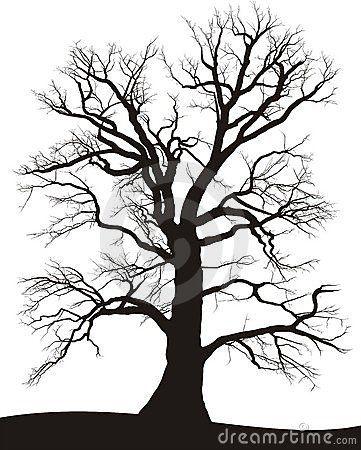 Silhouette of a black tree on white, oak Summer
