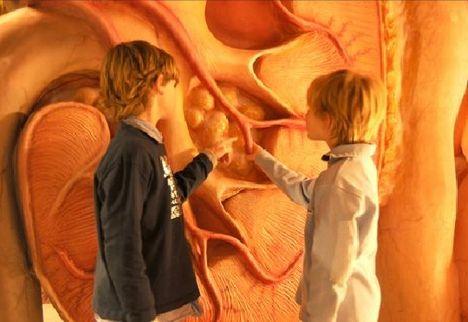 Corpus, museum in Leiden / A trip through the human body