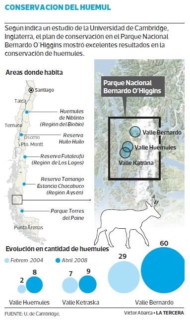 Universidad de Cambridge destaca recuperación del huemul en Patagonia chilena.