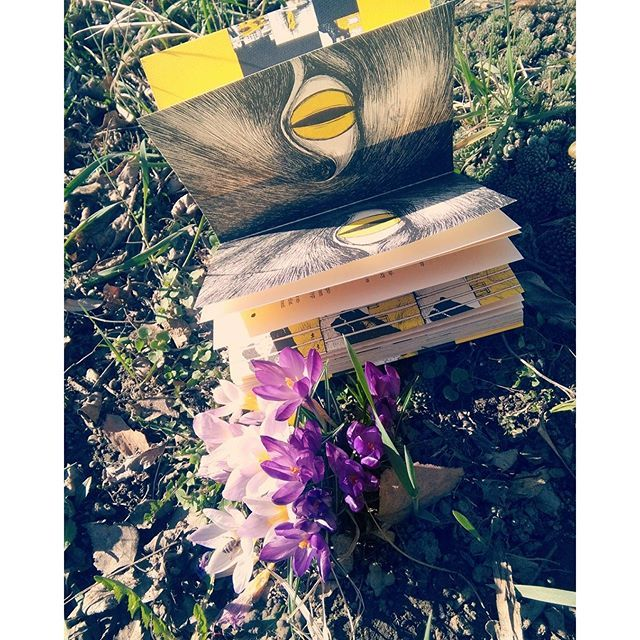 #spring #sunnymonday #sunny #tracyhotygr #eyes #yellow #flower #purple #grass #williamsaroyan