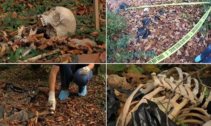 Inside the 'body farm' where corpses are left outside to decompose for forensic researchers to study Site in Knoxville, Tennessee, allows CSI teams to replicate murder scenes Up to 190 remains are littered through the woodland hills at any one time Bodies donated by individuals hoping to snare killers from beyond grave A similar high-altitude facility is set to open in Colorado desert next year By SIMON TOMLINSON PUBLISHED: 06:41 EST, 20 Nov2012 | UPDATED: 08:49 EST, 20 Nov 2012..Read  mor
