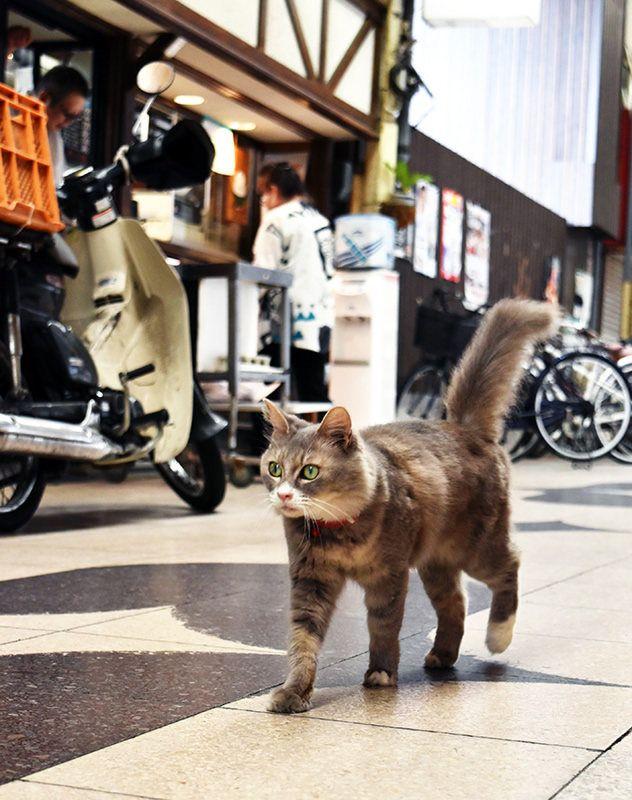 広島県尾道市「県路地裏観光課長」猫のララ