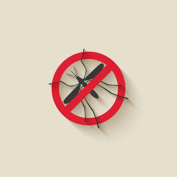 Redoblar esfuerzos para eliminar criaderos del mosquito que transmite los virus dengue y chikungunya, OPS - http://plenilunia.com/prevencion/redoblar-esfuerzos-para-eliminar-criaderos-del-mosquito-que-transmite-los-virus-dengue-y-chikungunya-ops/30383/