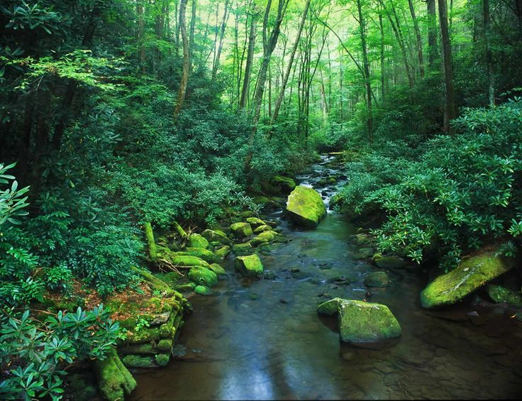 Secluded Cabins In NC Mountains   mountain%20creek_mountains%20vacation%20home.jpg