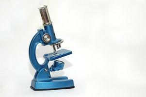Elementary Microscope Activities thumbnail