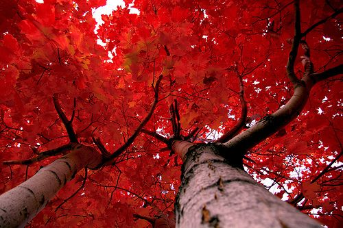red, #red, #red #fall