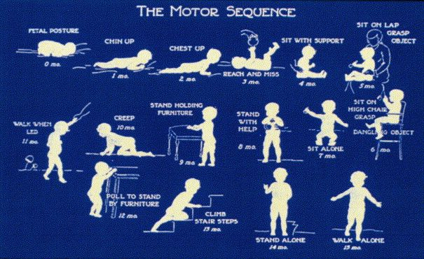 Motor Develop Milestones: What is the typical progression of a child? from AOTA