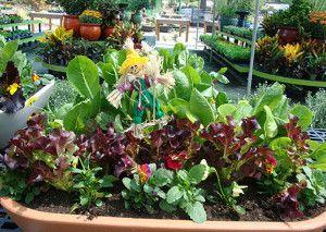176 best Garden Vegetables Fruits images on Pinterest