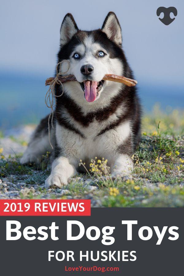 Best Dog Toys For Huskies 2020 Reviews Top Picks Best Dog