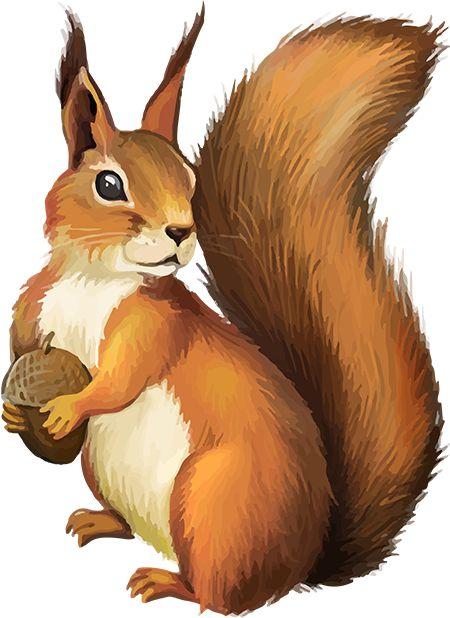 tubes écureuils                                                                                                                                                                                 Plus